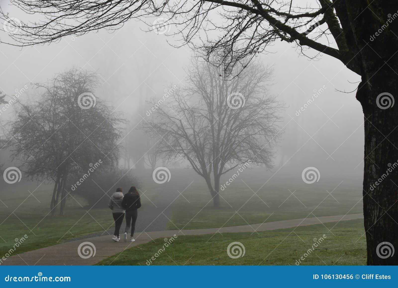 Morgondimma till och med träd i Redmond, WA parkerar