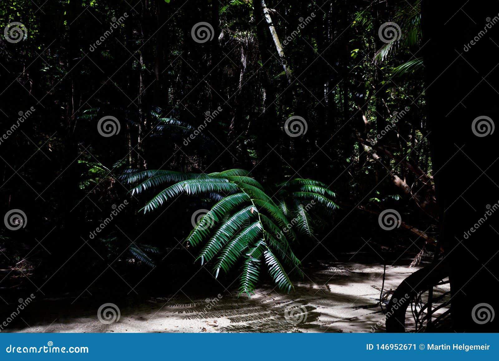 Morgonljus i den härliga djungelträdgården, sol skiner rätt på palmblad, fraserön, Australien