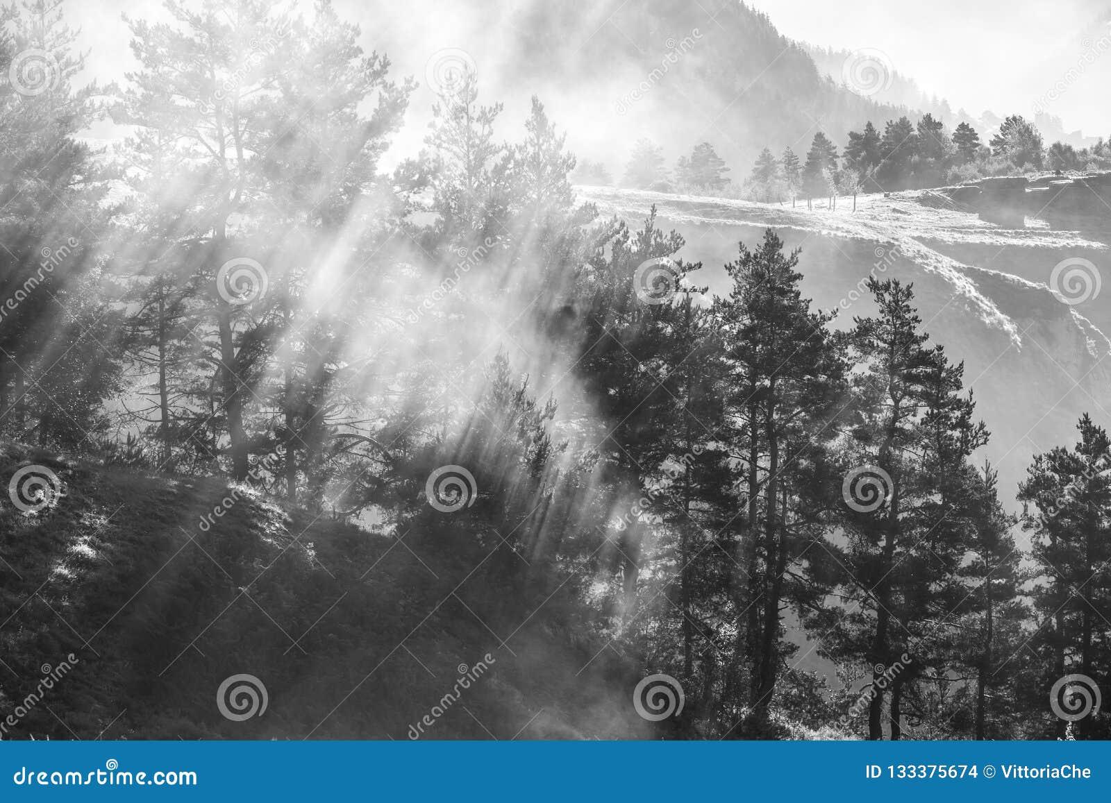 Morgonmist i skogen, solstrålar som bryter till och med dimman, Georgia, Tusheti