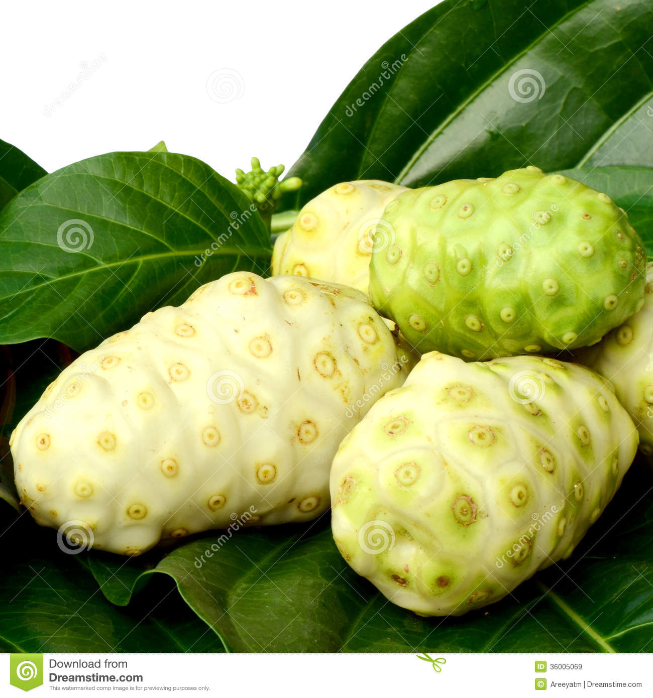 indian noni business plan