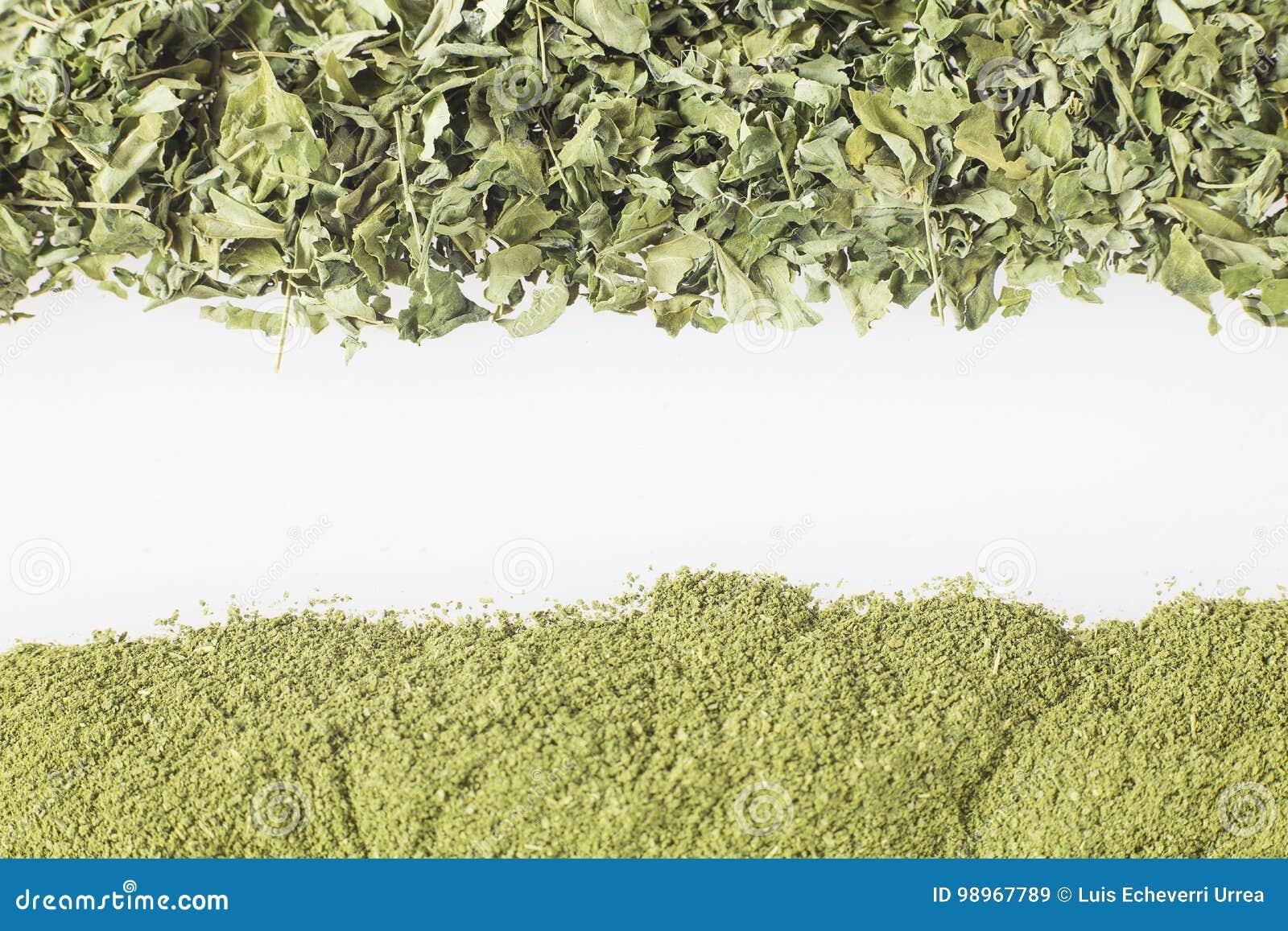 Moringa Blatter Und Staub Moringa Oleifera Stockbild Bild Von