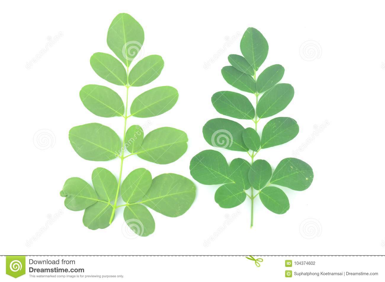 Moringa leaves are green herbs.