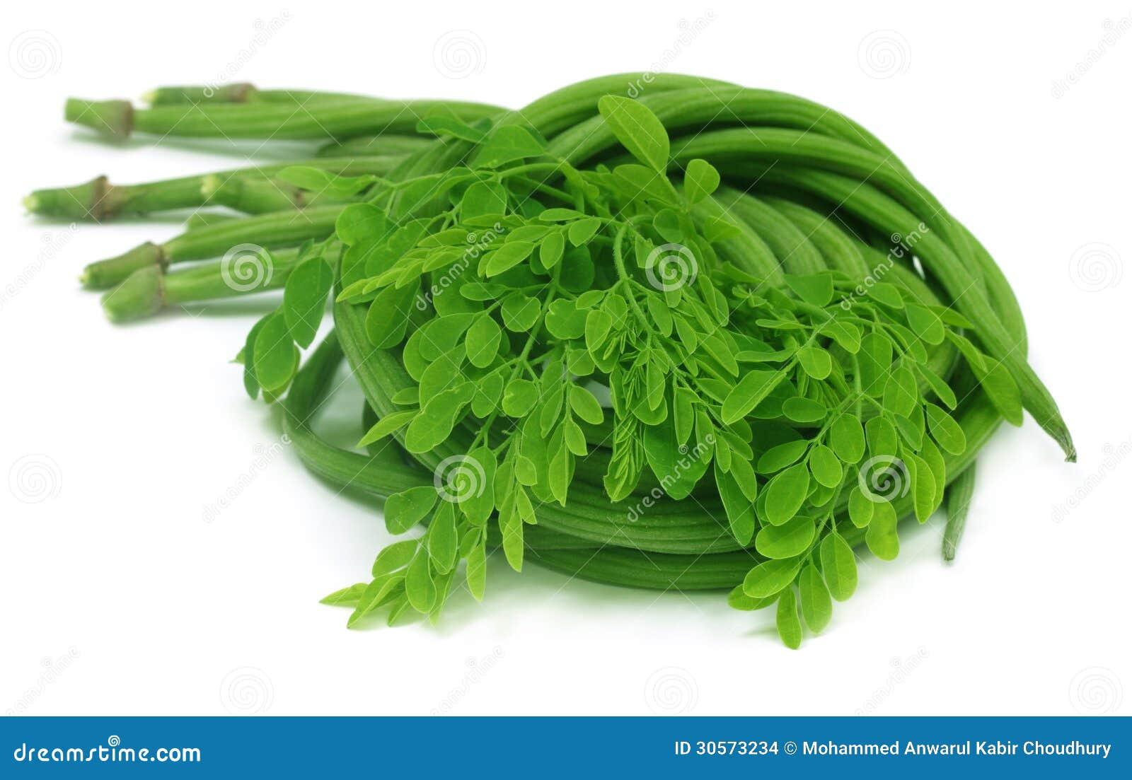 Moringa.oleifera oder sonjna mit frischen Blättern