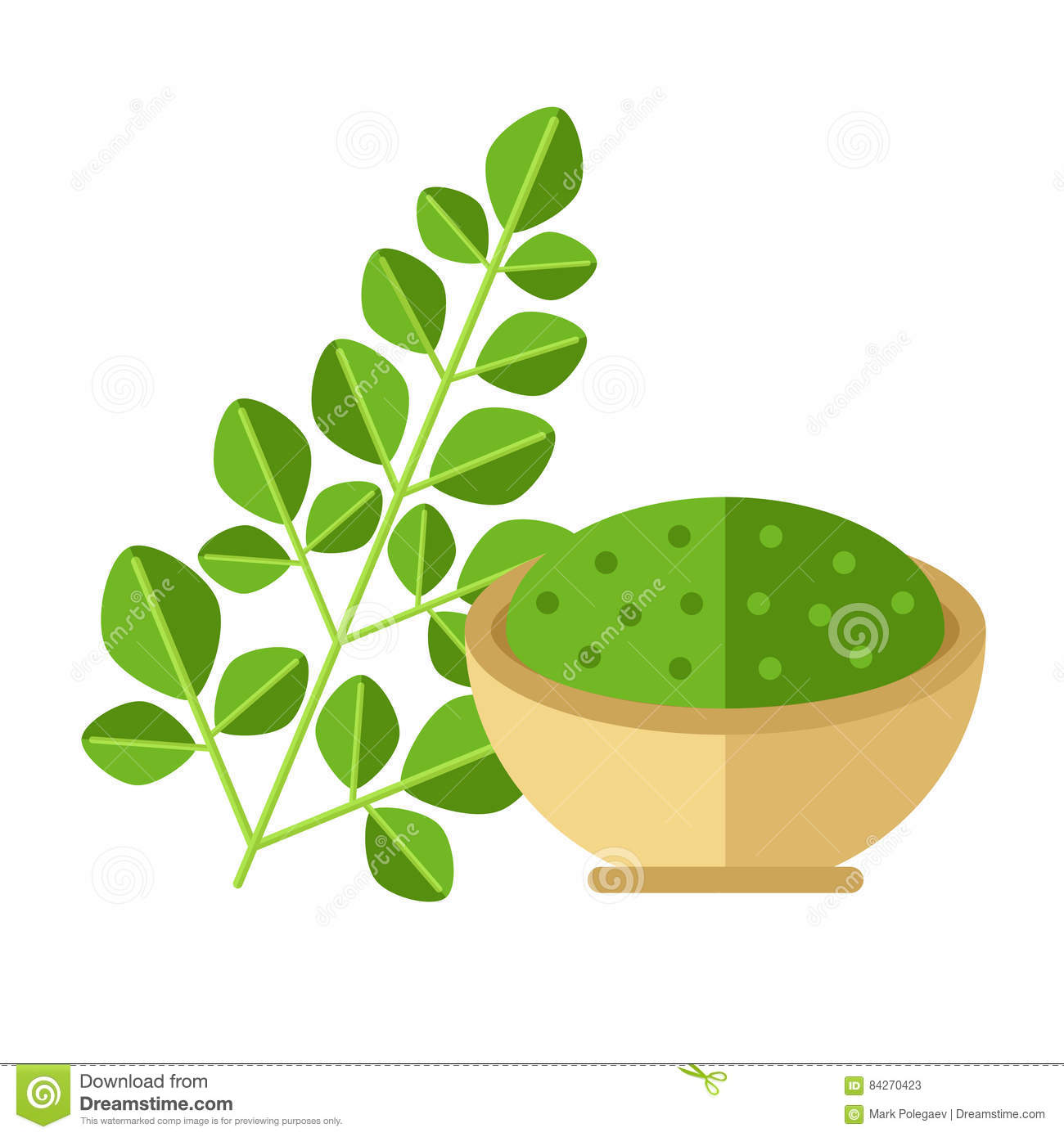 Moringa plant with leaves and seed powder. Vector illustration.