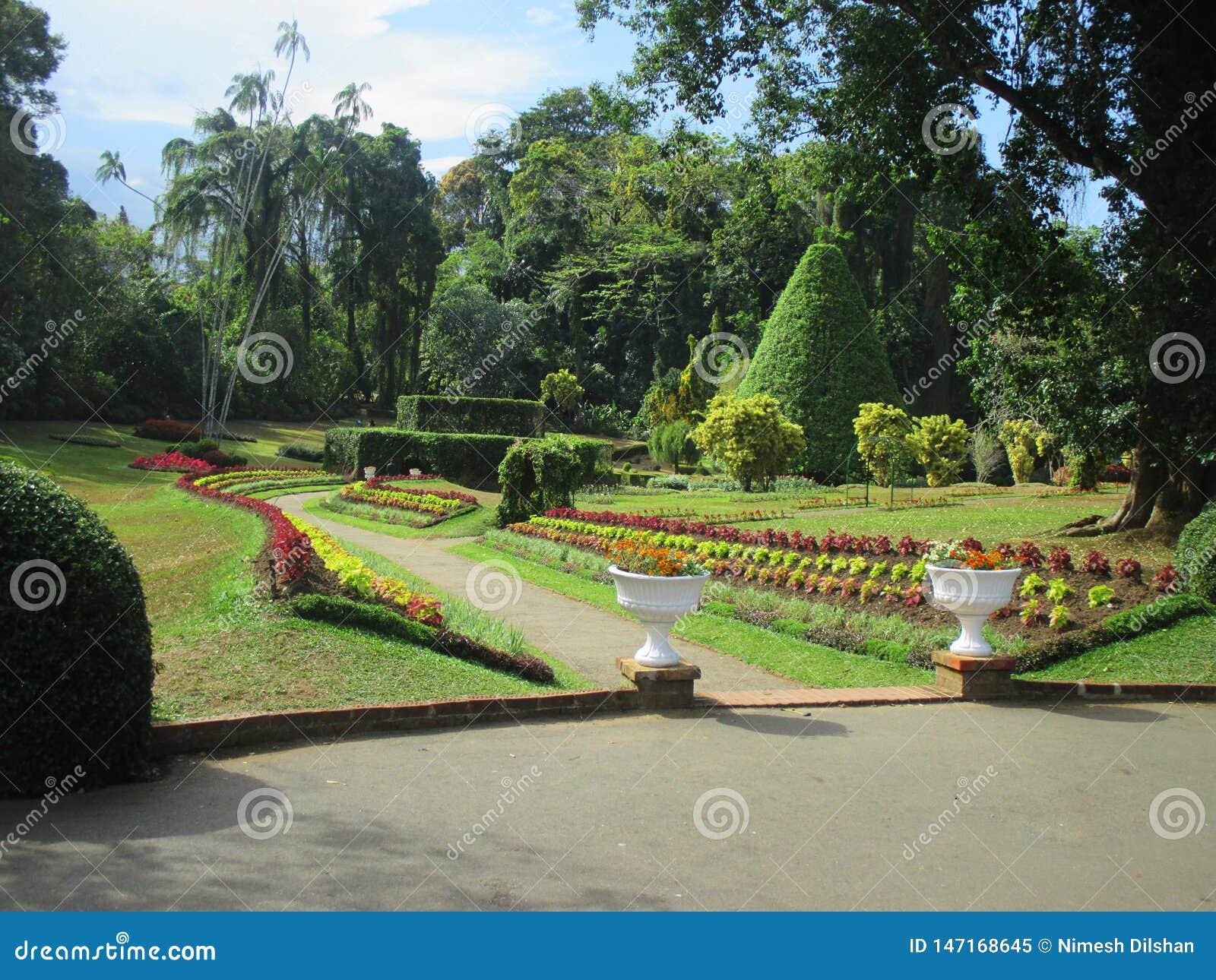 Morning in botanical garden