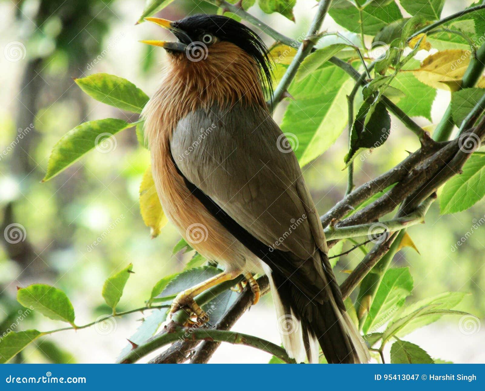 Morning chirp stock image  Image of nature, eyecandy - 95413047