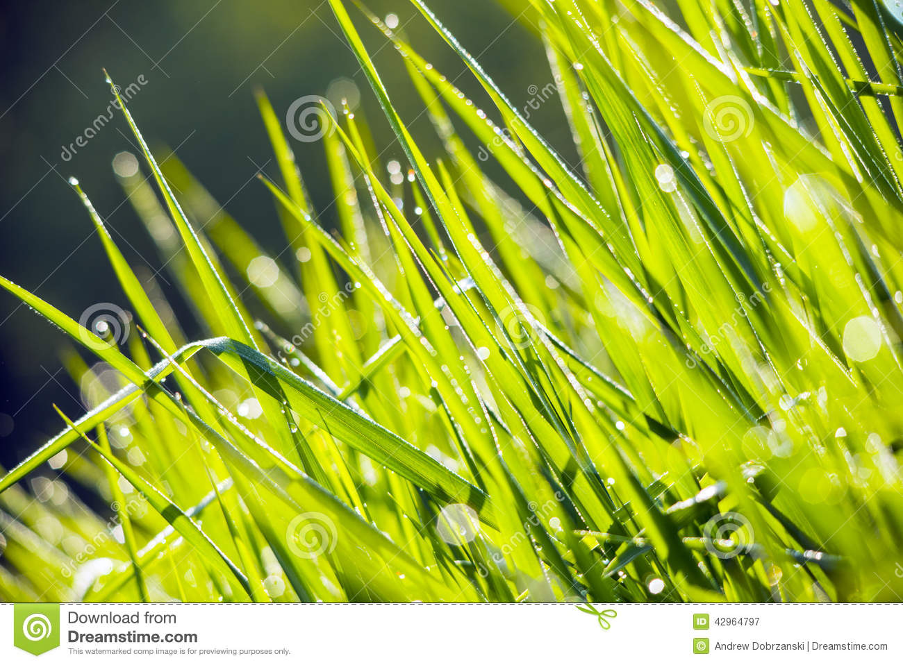 Mist And The Morning Dew, The - The Mist And The Morning Dew