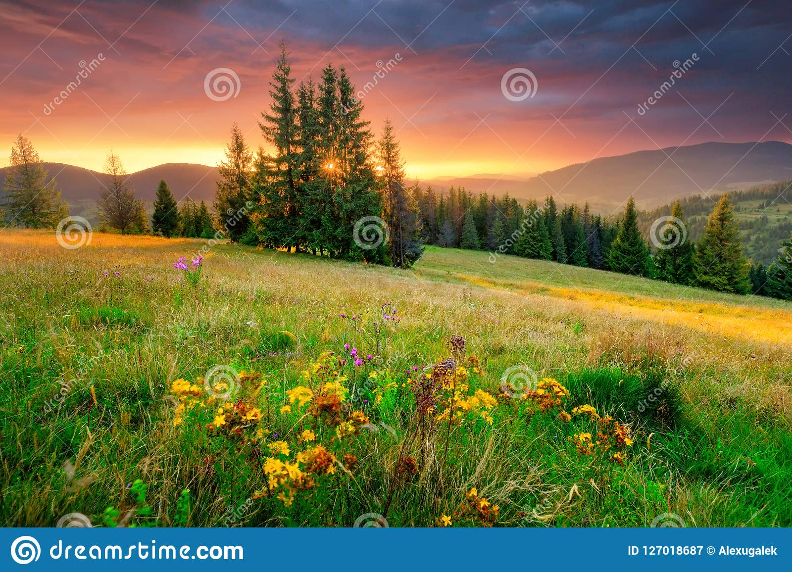 Morning landscape. Green meadow and colorful sky at the sunrise.