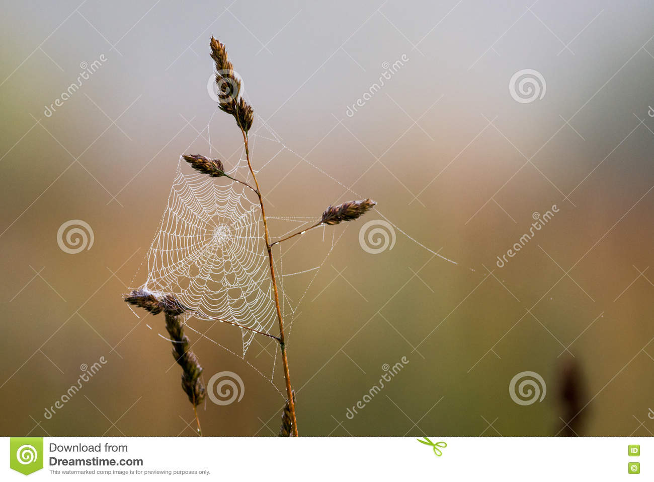 Download Morning meadow stock image. Image of structure, early - 75923269