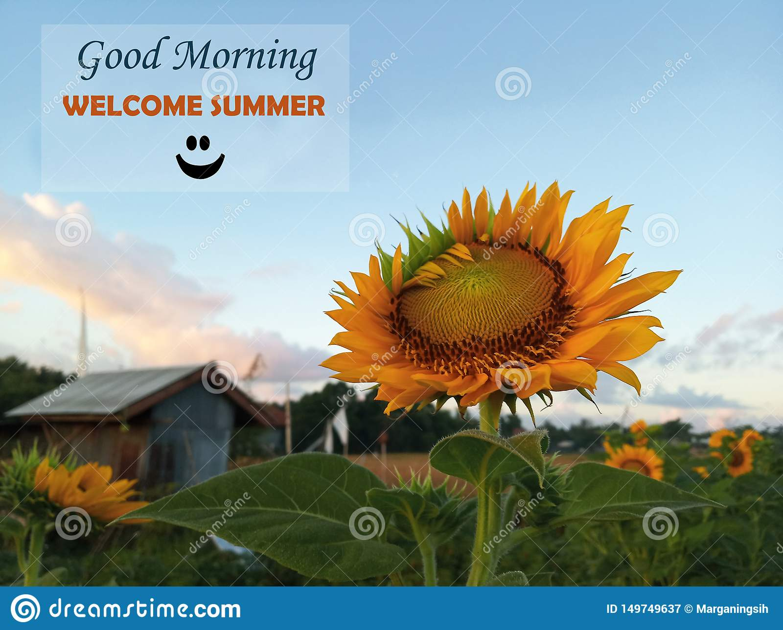 Morning Message  Summer Greetings- Good Morning, Welcome