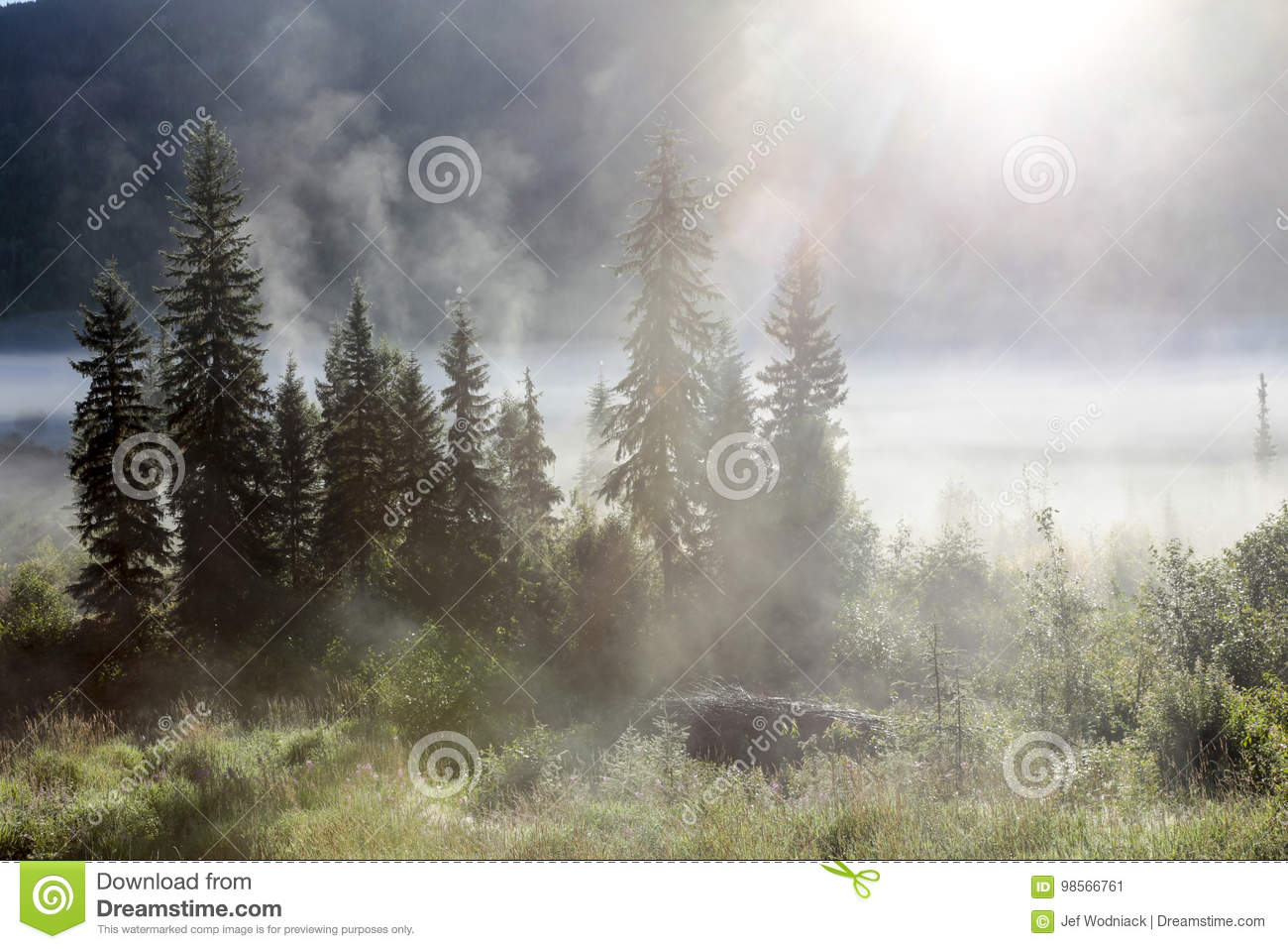 Morning mist stock image  Image of gray, natural, mist
