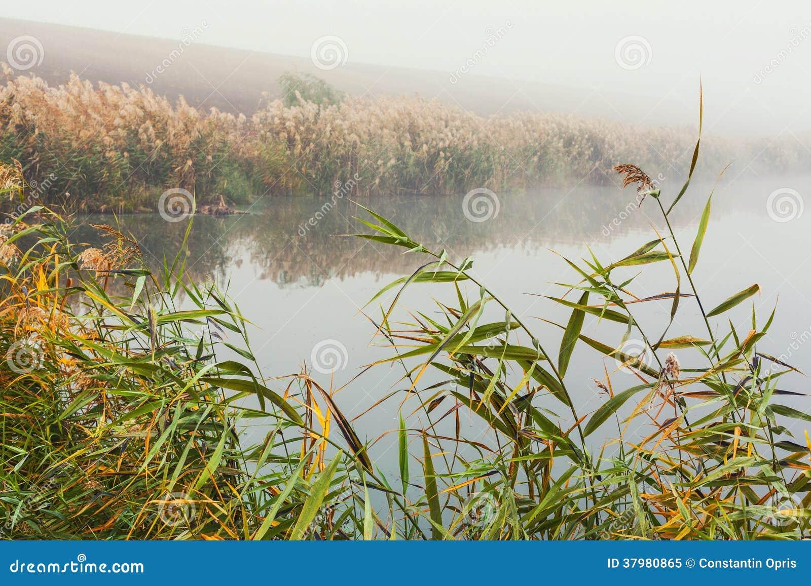 Morning mist on lake royalty free stock photo image for Good fishing days