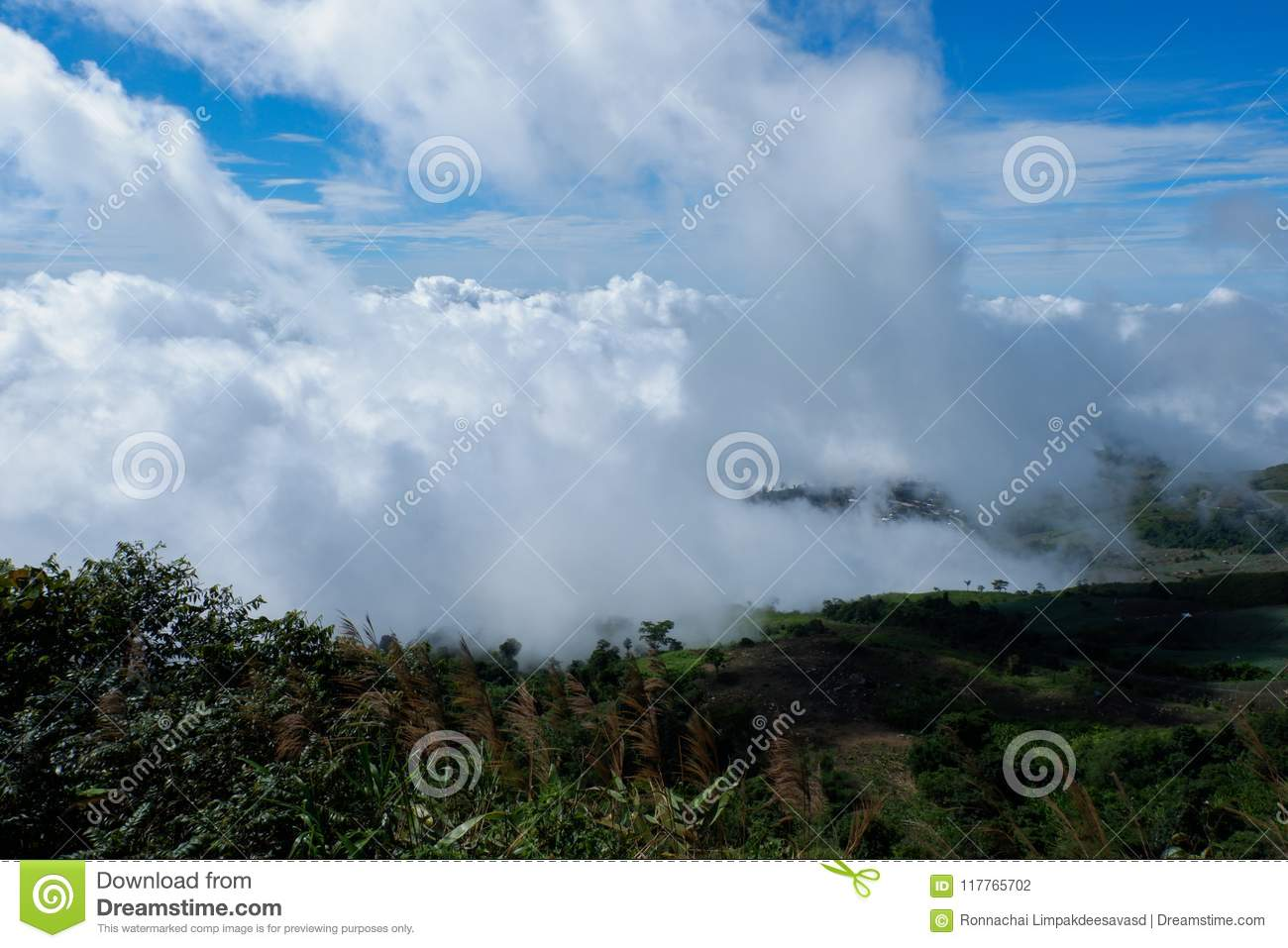 Morning Mountain View Through Forest Mountain Layers And Fog Early Morning In The Mountain Forest Forest And Mountains Behind Blue Mountains And First