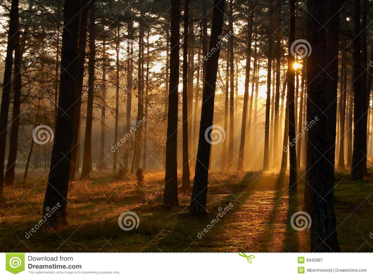 Morning sun rays in the woods