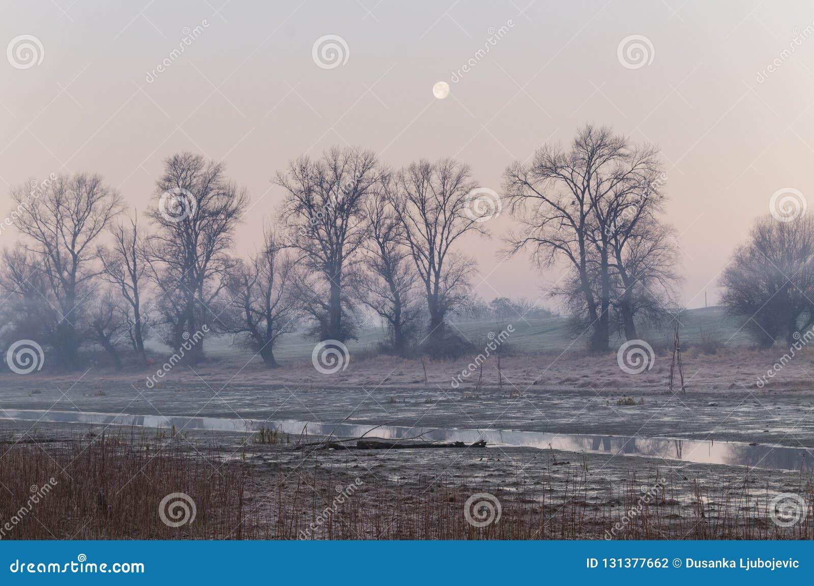Morning in swamp