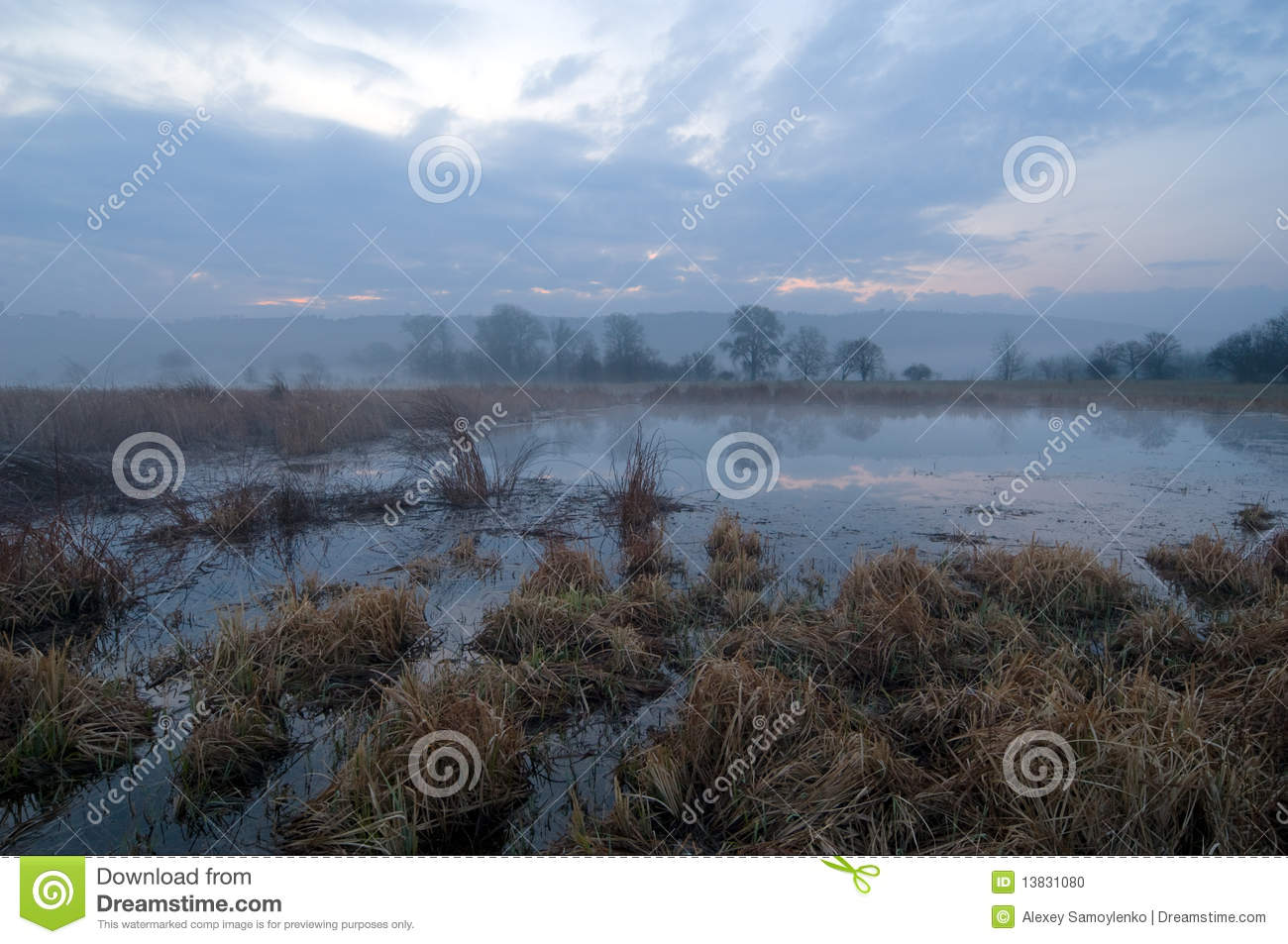 Morning time in swamp area