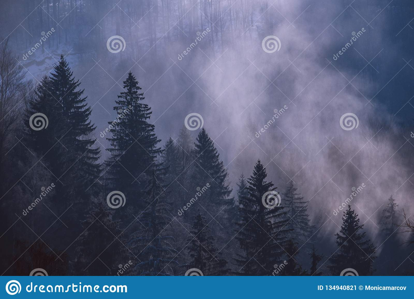 Morning winter Sunny foggy forest