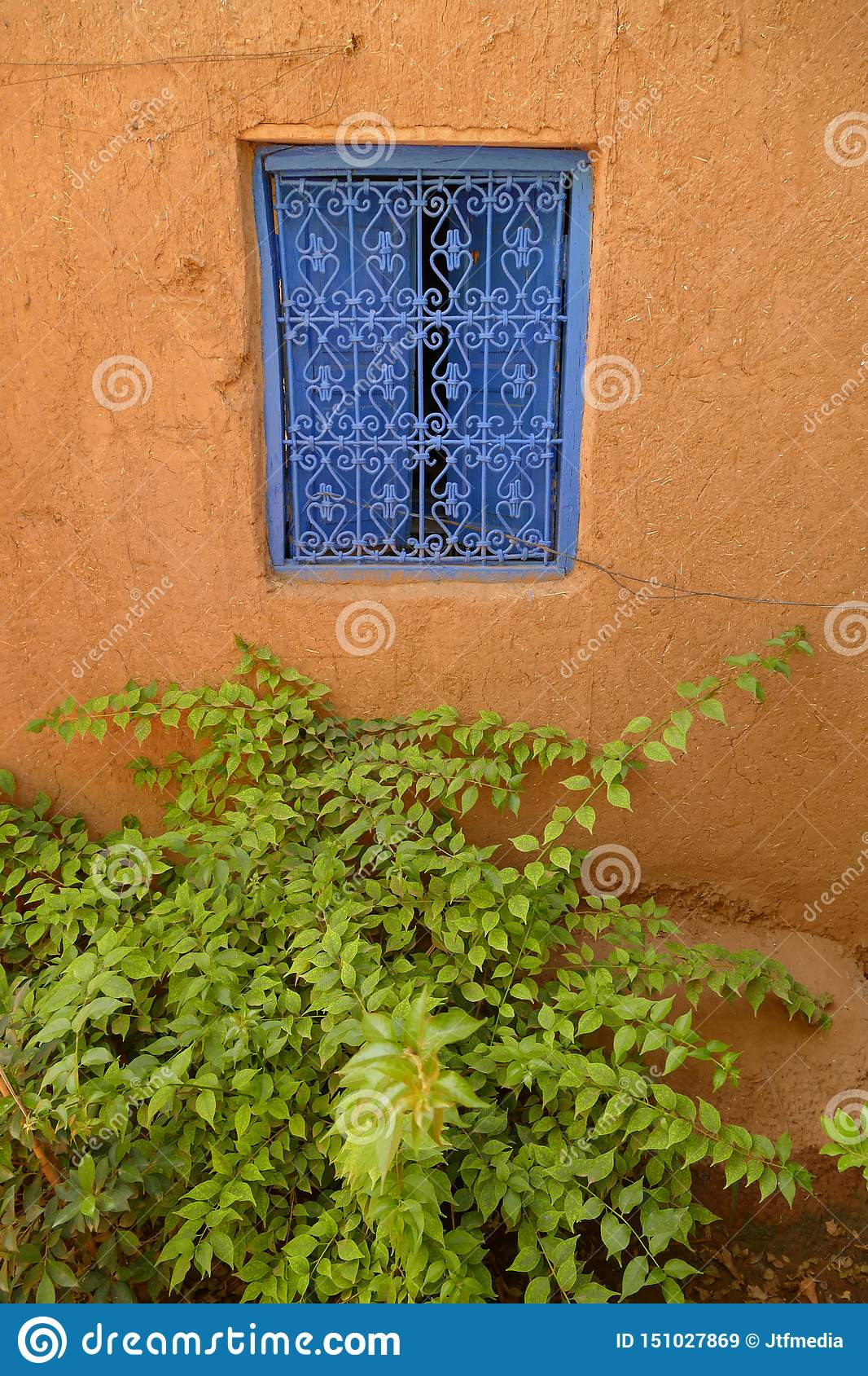 Green plant underneath a blue window with a decorative blue metal grid in Marrakech