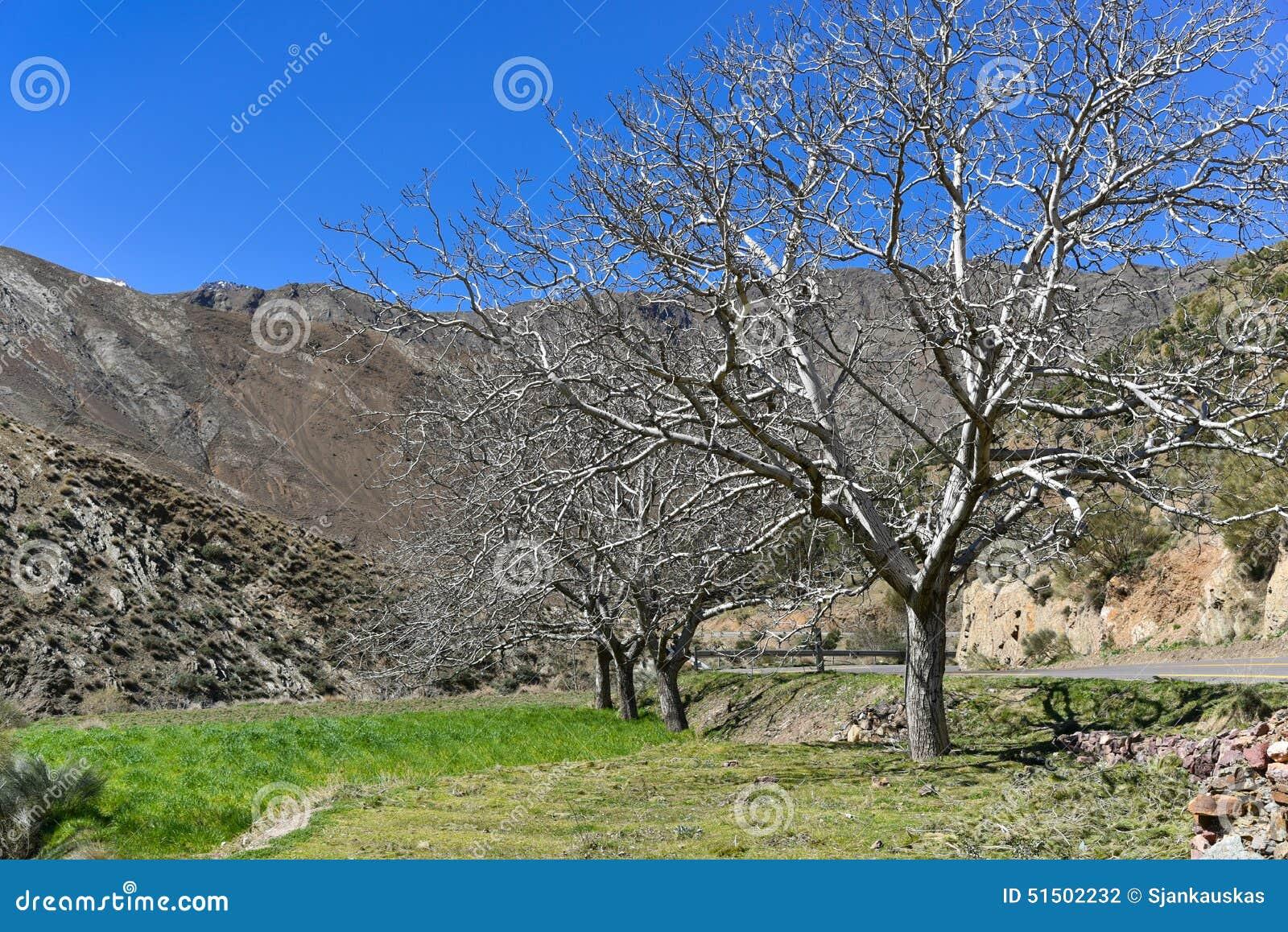 Spring Walnut Trees Stock Photography : CartoonDealer.com ...