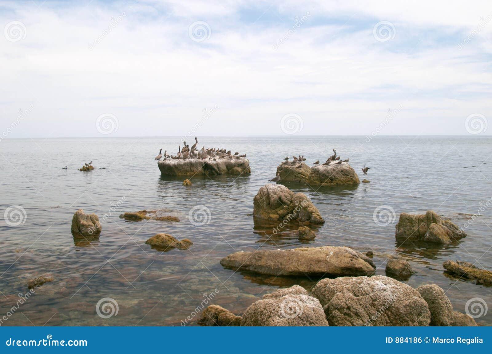 Morskie ptaki rock