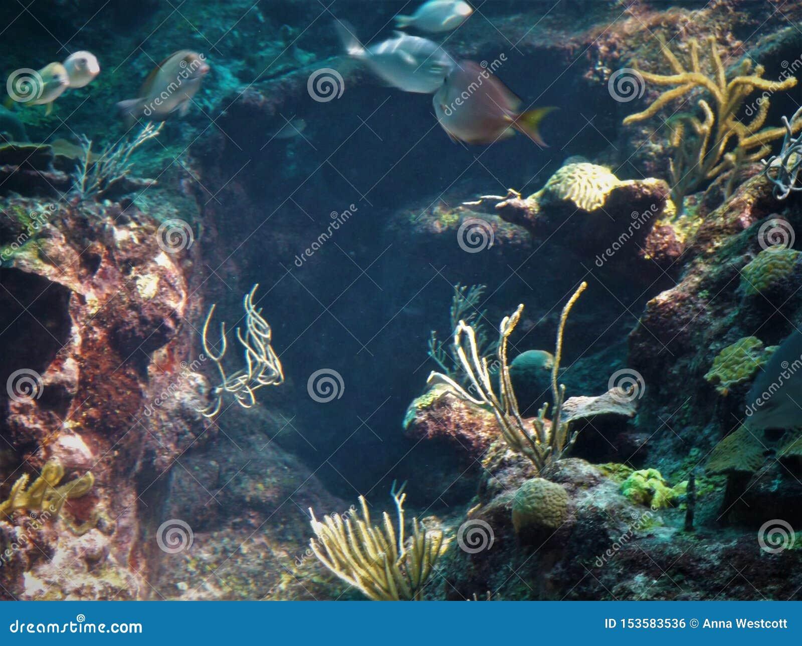 Morskiego życia Meksyk rafa koralowa