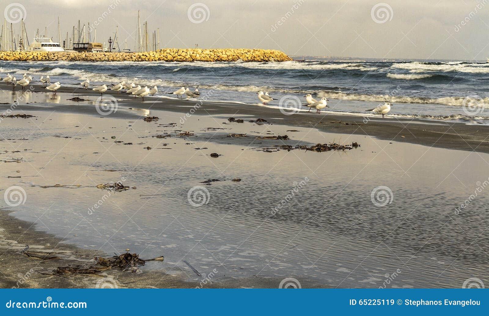 Morze galasy w Larnaca ciborach