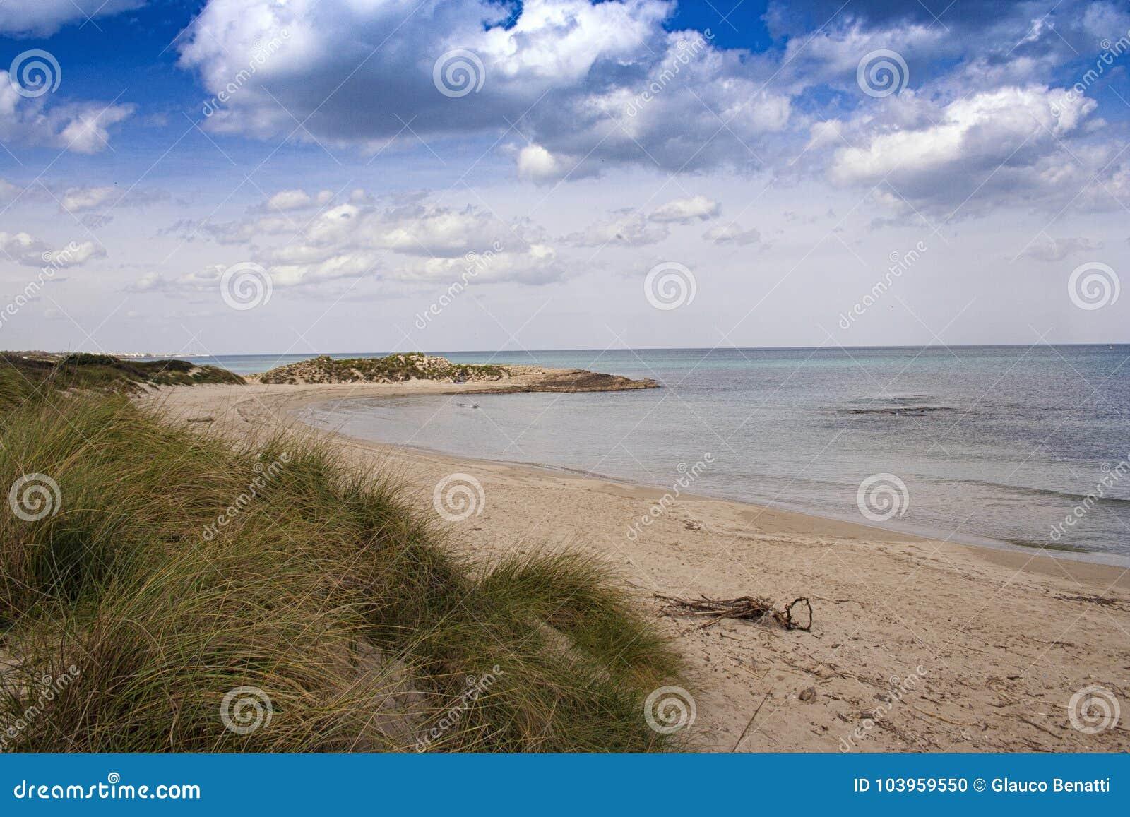 Morze plaża z roślinnością