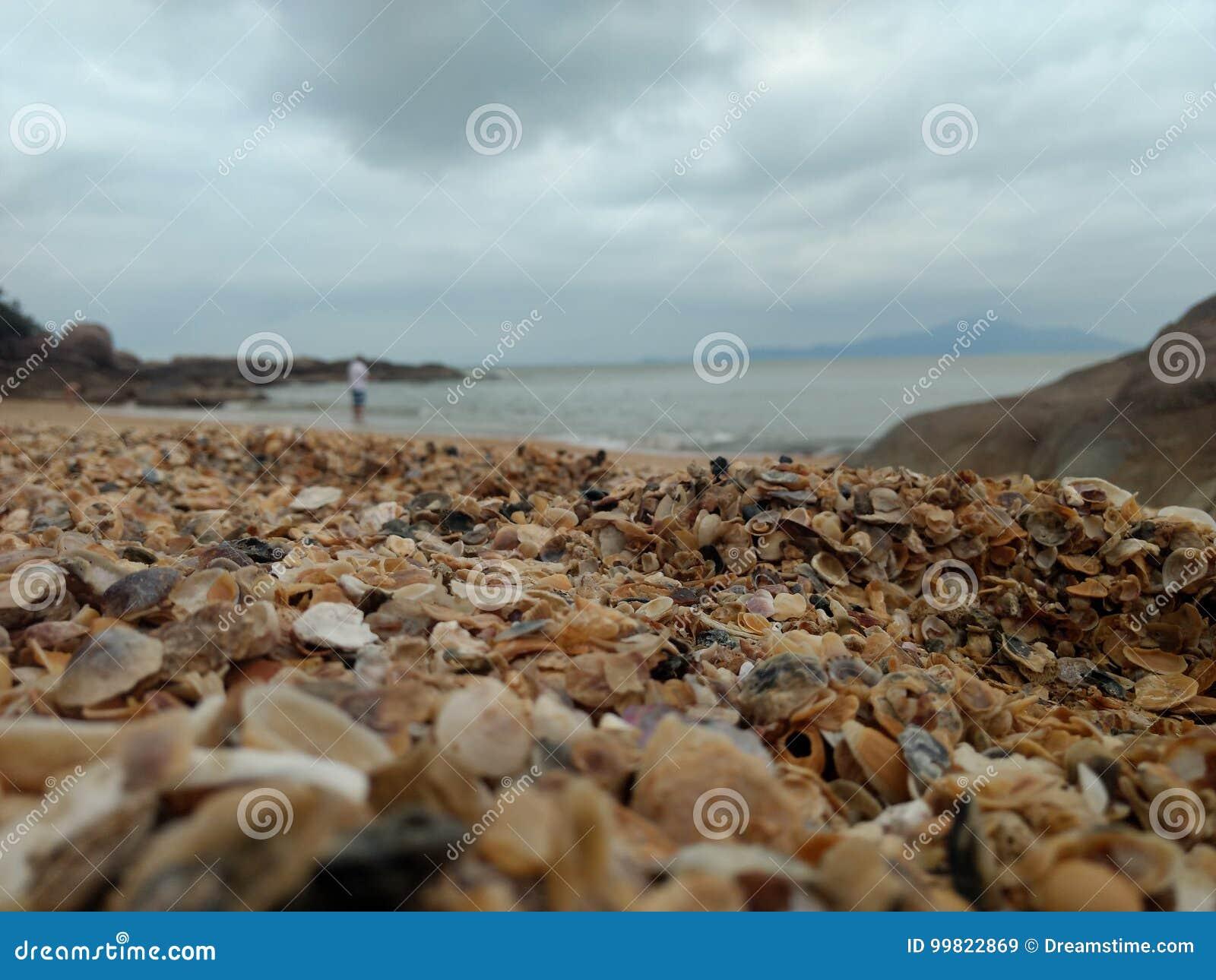 Morze skorupy przy plażą