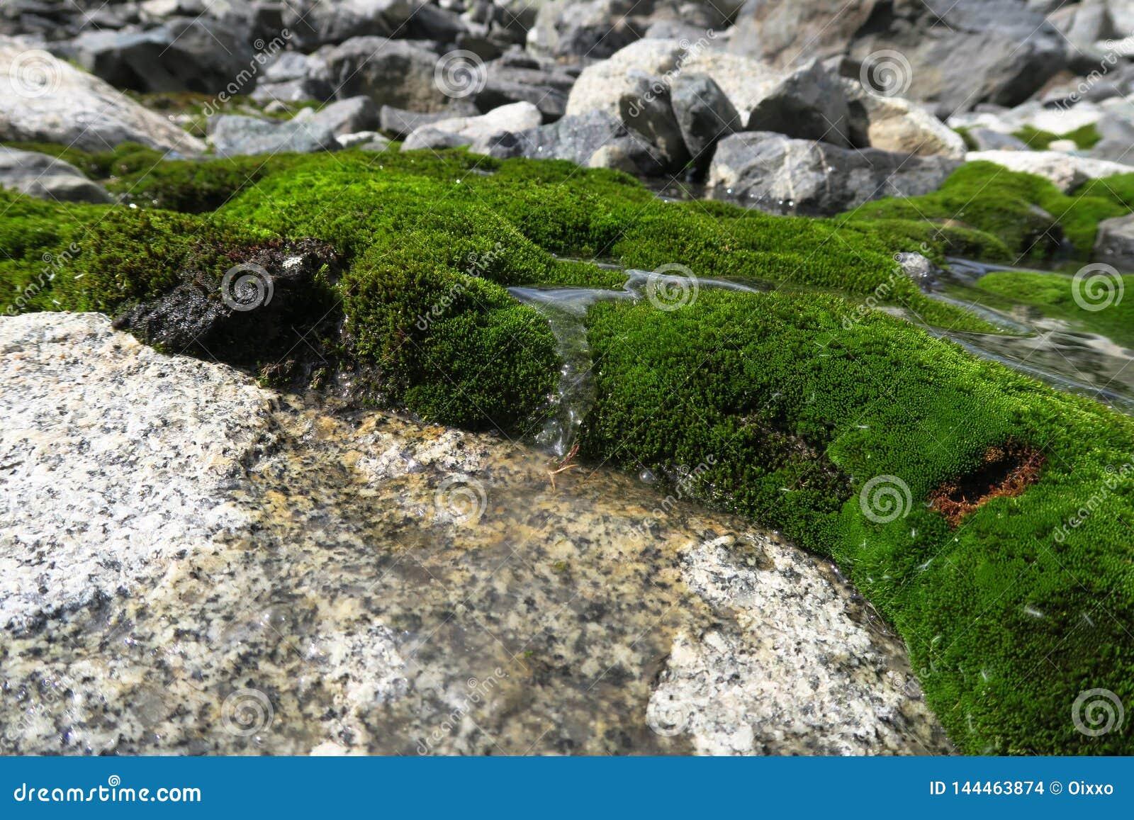 Mos-behandelde Waterval en Pool Mooi mos en korstmos behandelde steen bac