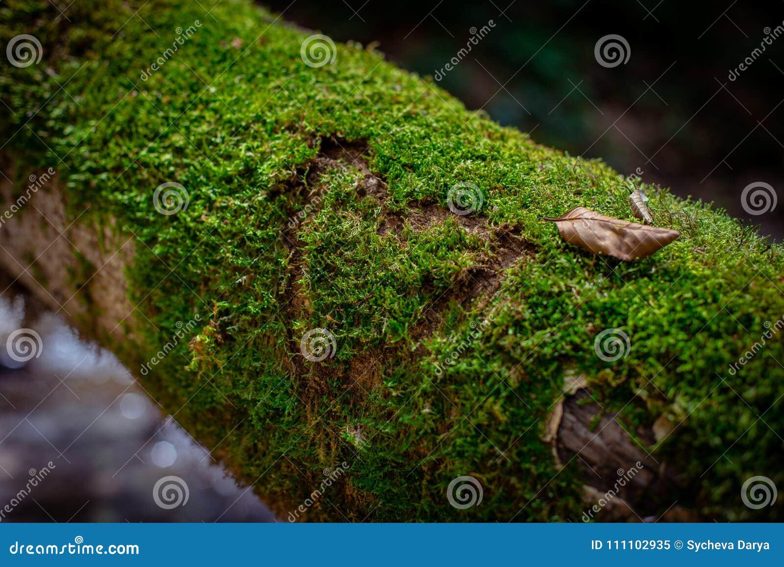 Mos in een boom