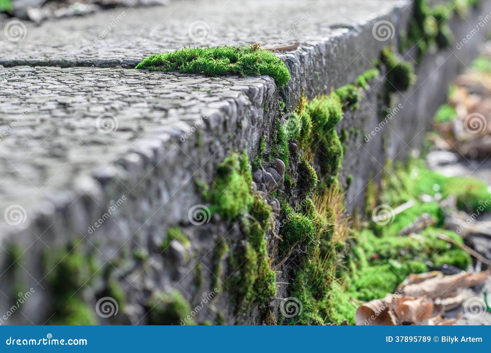 Mos op beton.