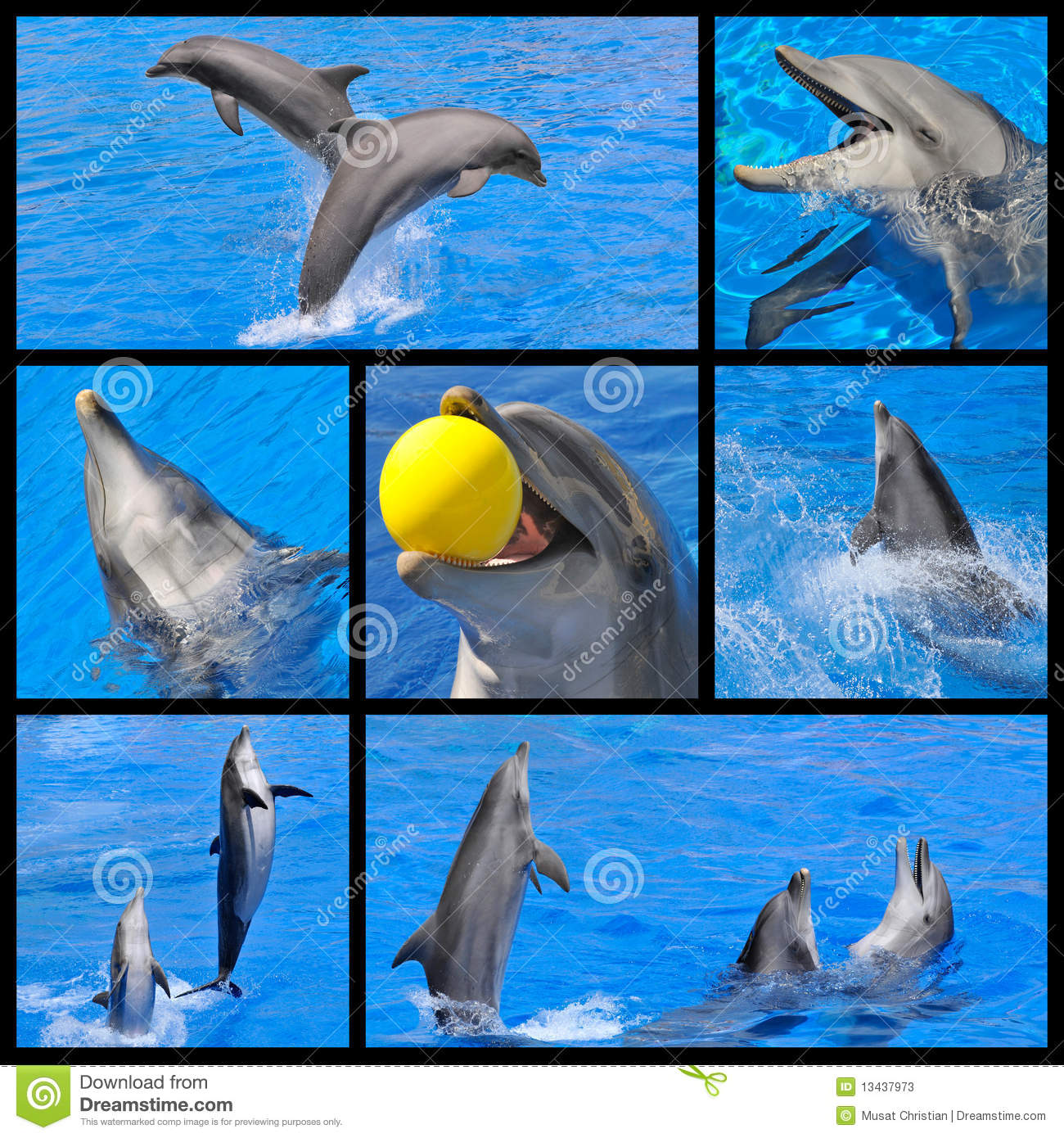mosaic fhotos of dolphins stock photos image 13437973