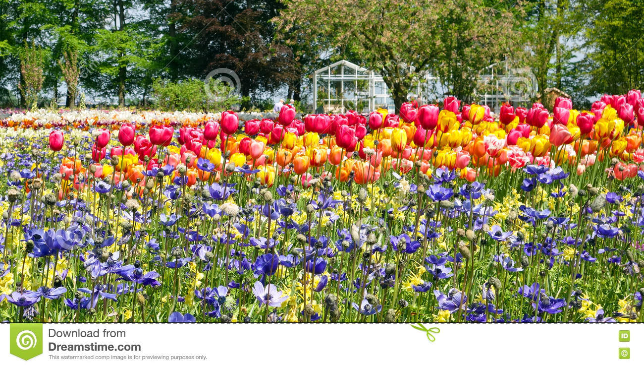 Mosaic Of Tulips And Other Bulb Flowers Stock Image