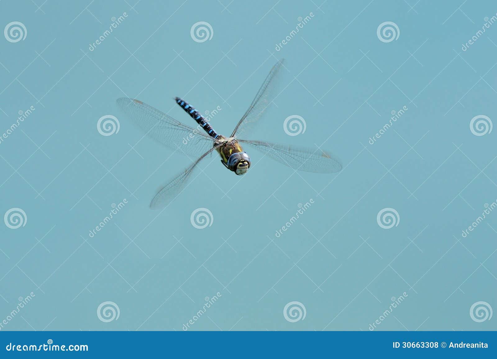 Mosca del dragón contra el cielo azul