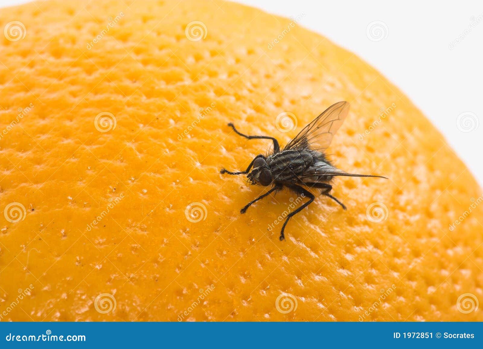 mosca e fruta imagem de stock imagem 1972851. Black Bedroom Furniture Sets. Home Design Ideas