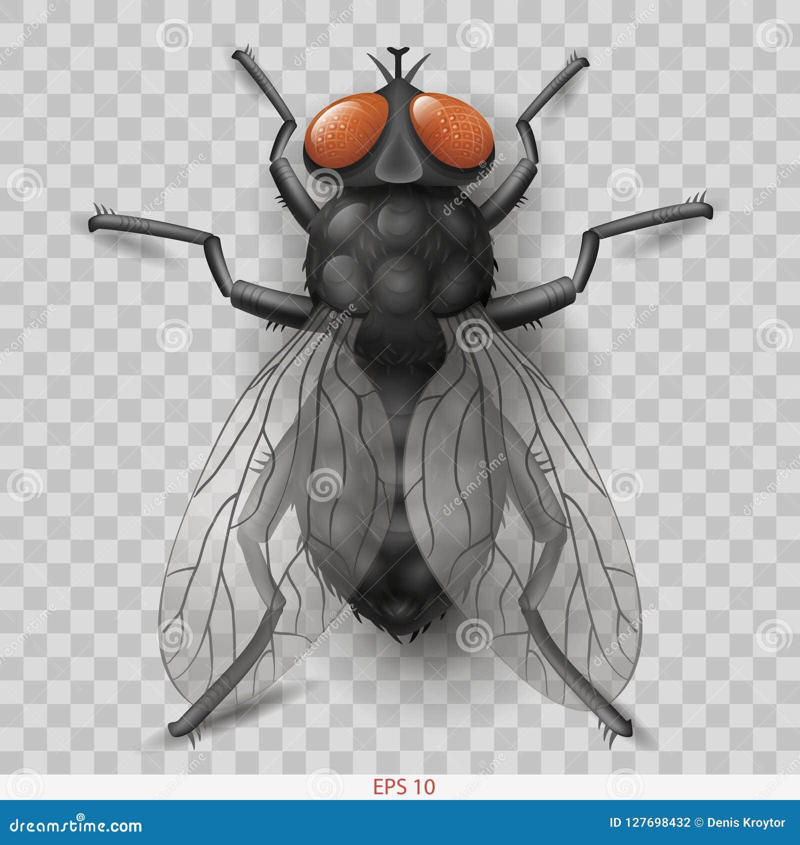 Mosca realista del insecto en mosca del insecto del vector