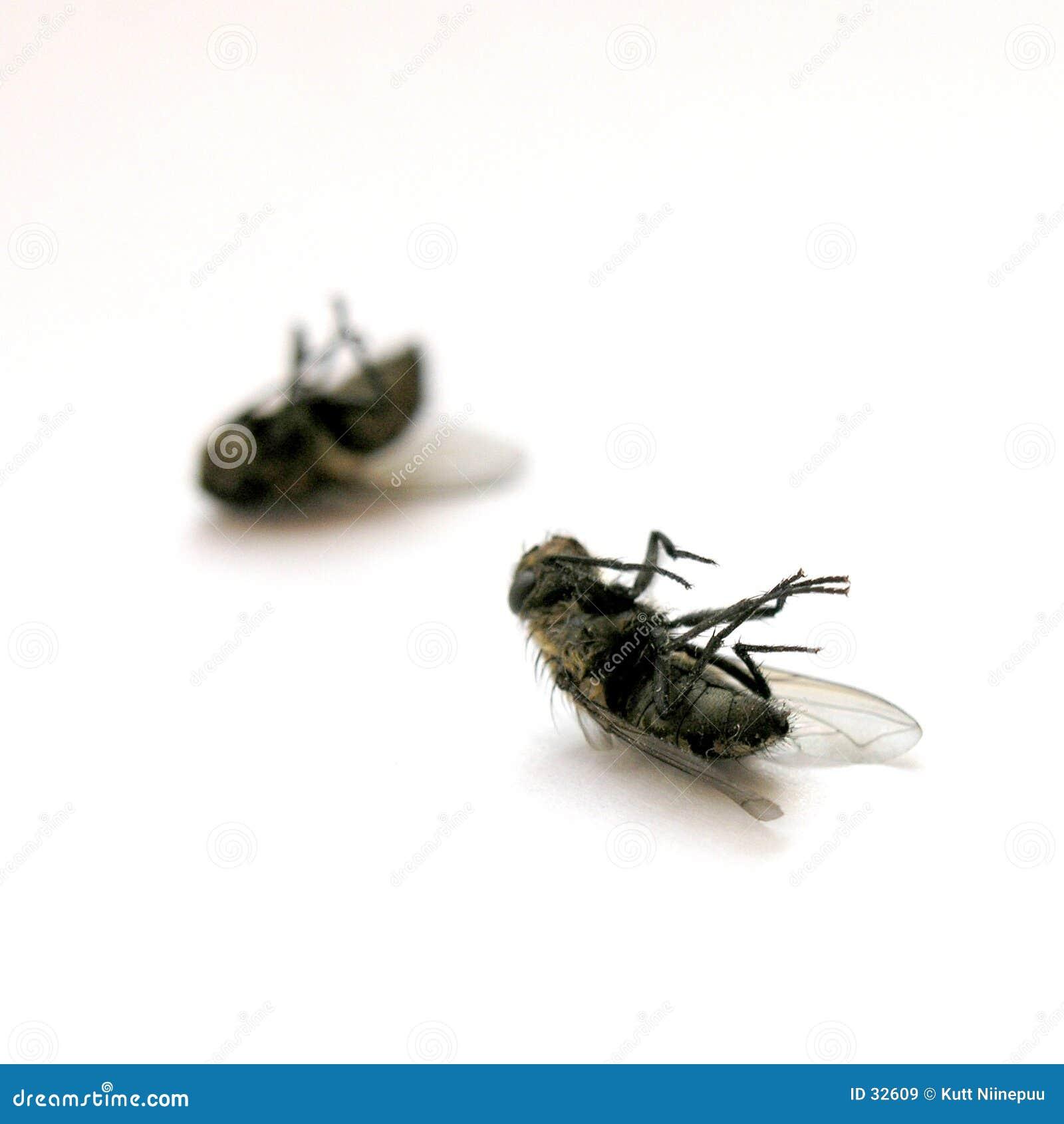 Download Moscas muertas imagen de archivo. Imagen de moscas, primer - 32609