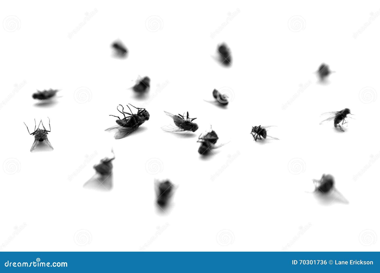 Moscas muertas en una pila