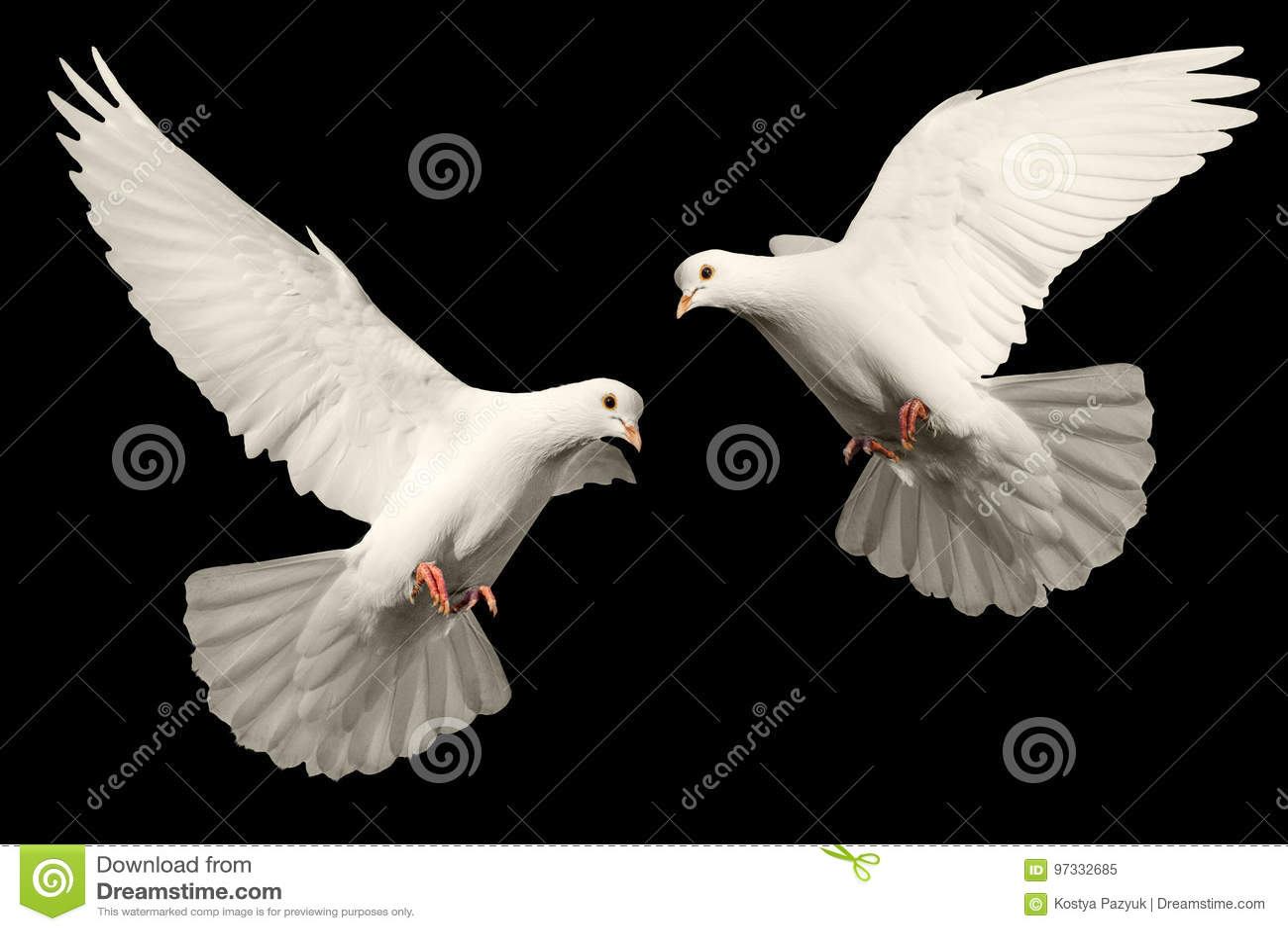 Mosche bianche della colomba