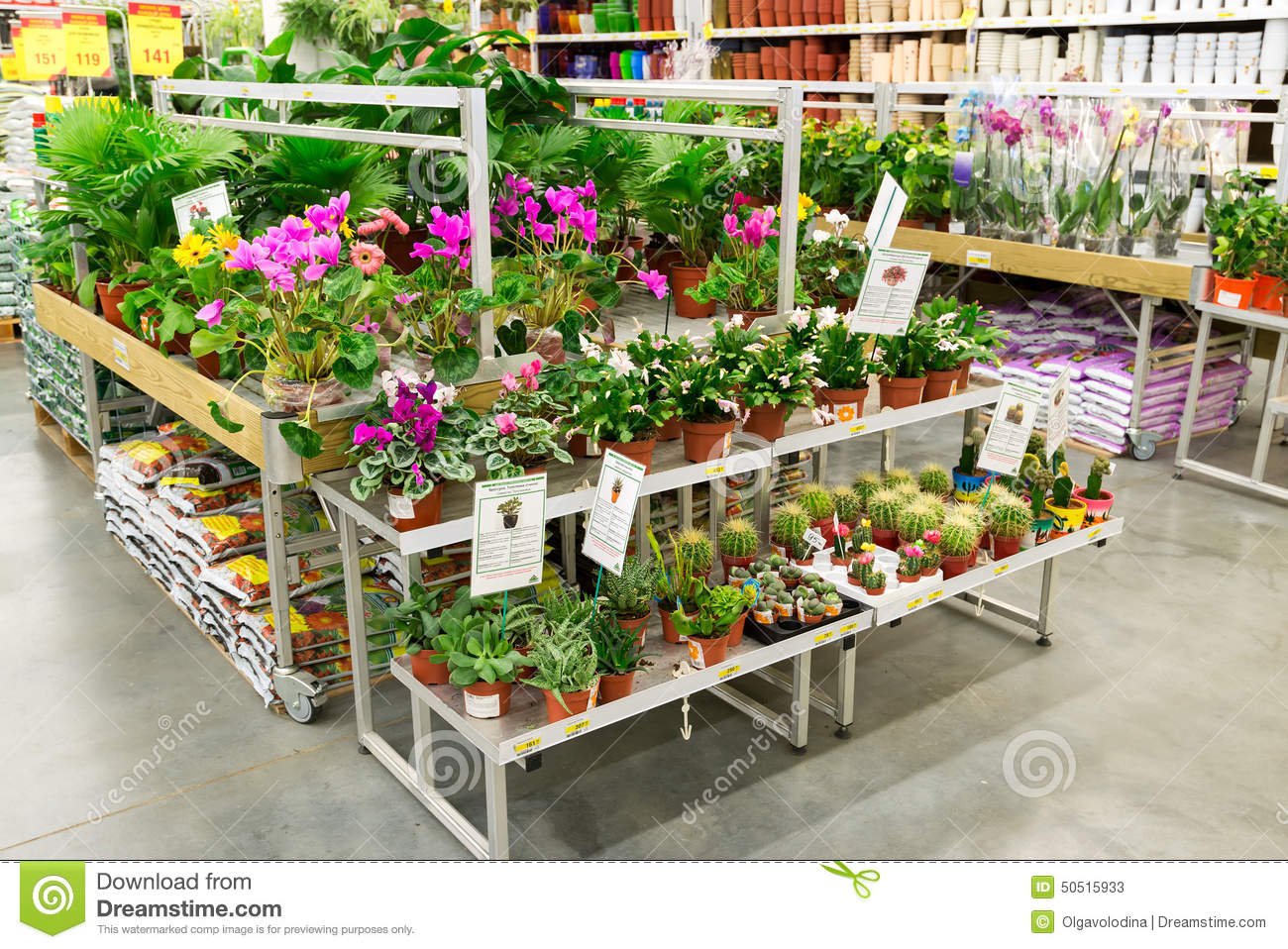 Moscow russia february 15 2015 potted plants for Plantas artificiales leroy merlin