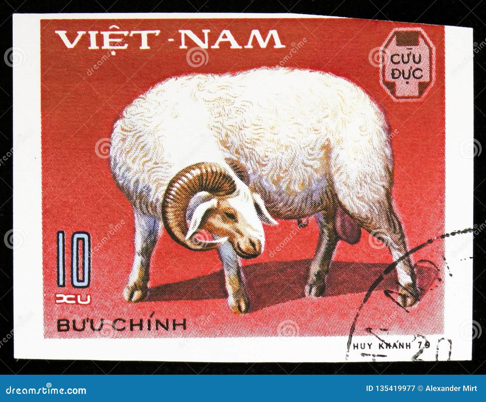 Ram Ovis ammon aries, Domestic horned animals serie, circa 1979