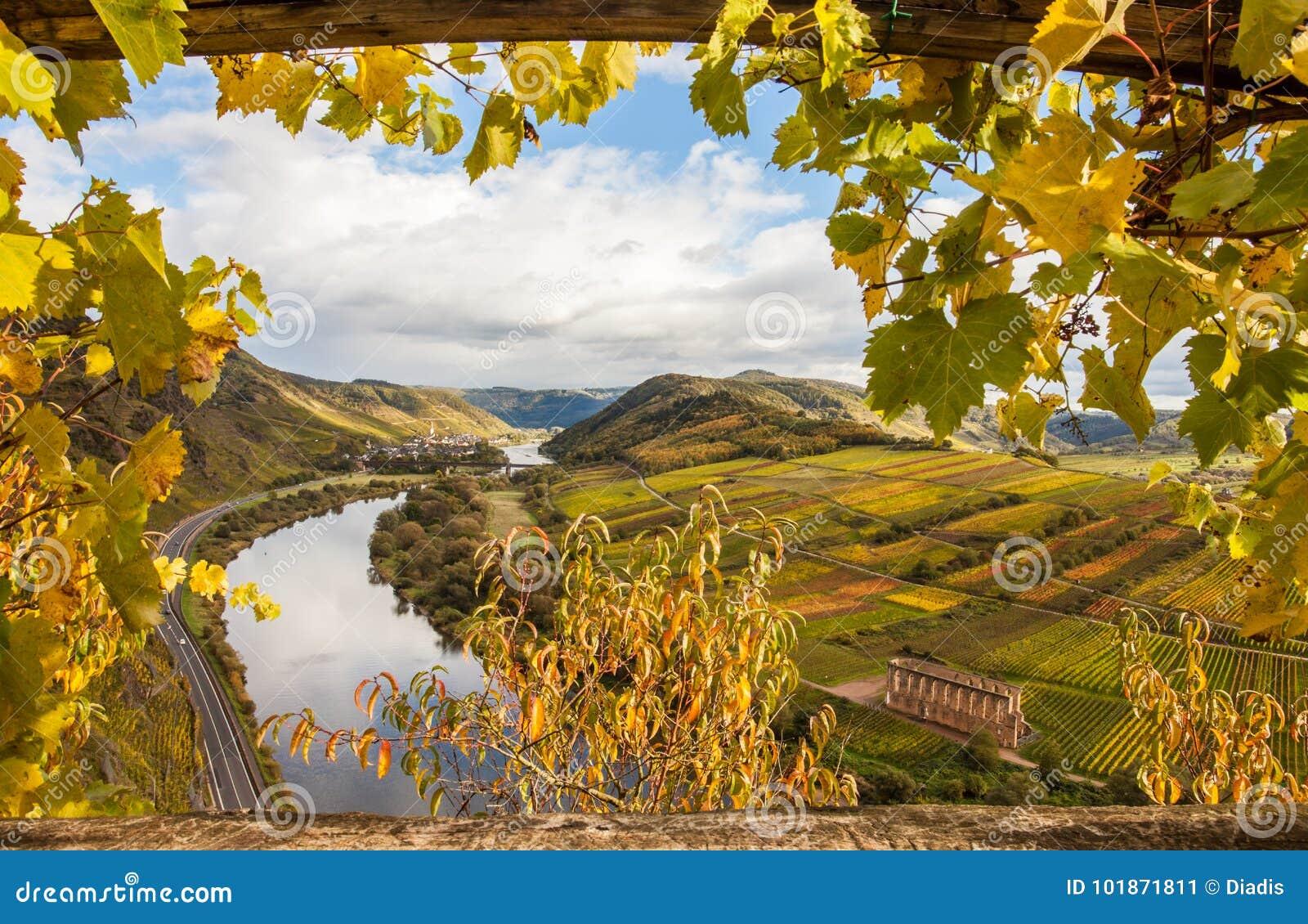 Klettersteig Germany : Moselle autumn golden vineyards landscape calmont region germany