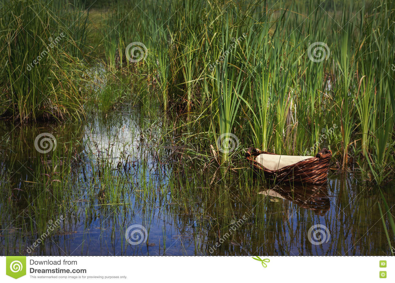 moses basket in the reeds w o text stock photo image 71584947