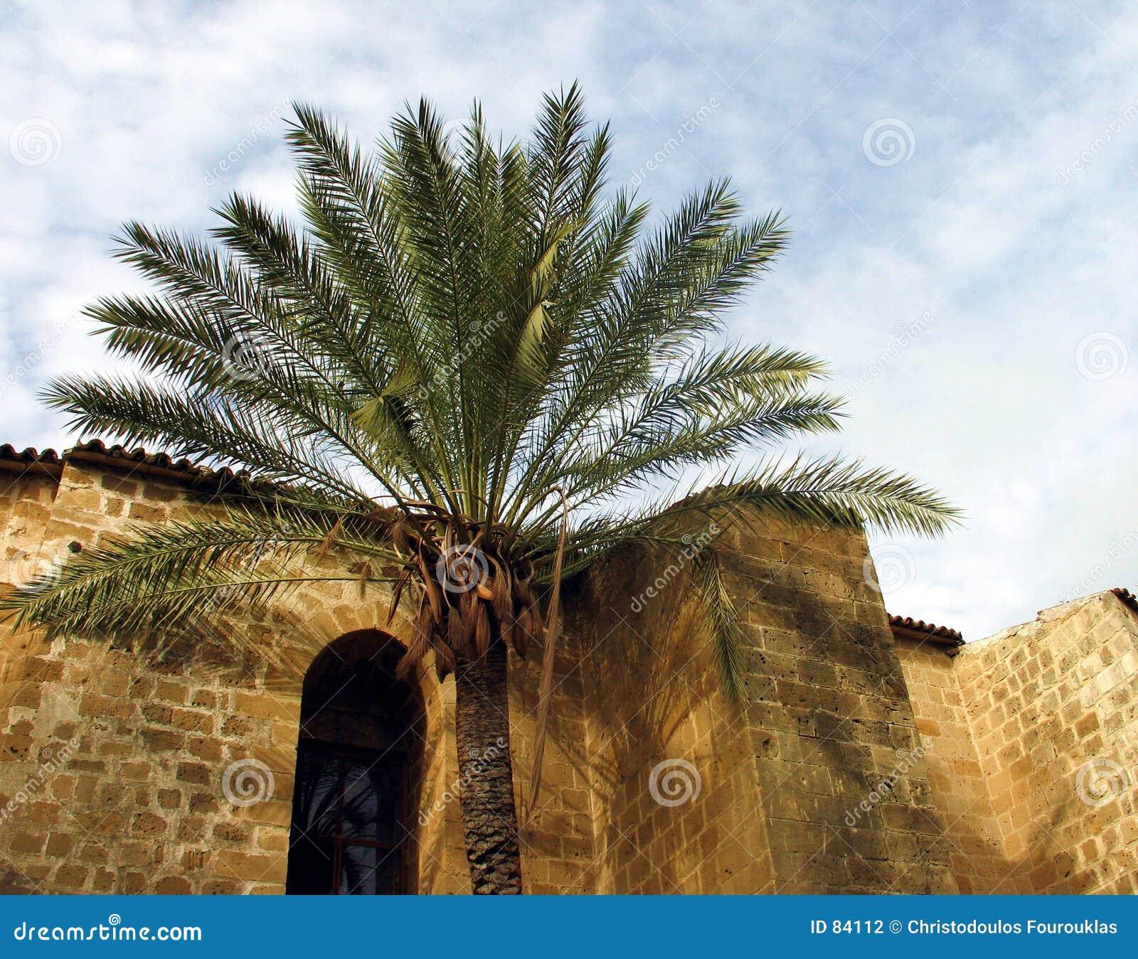 Mosquée de palmier