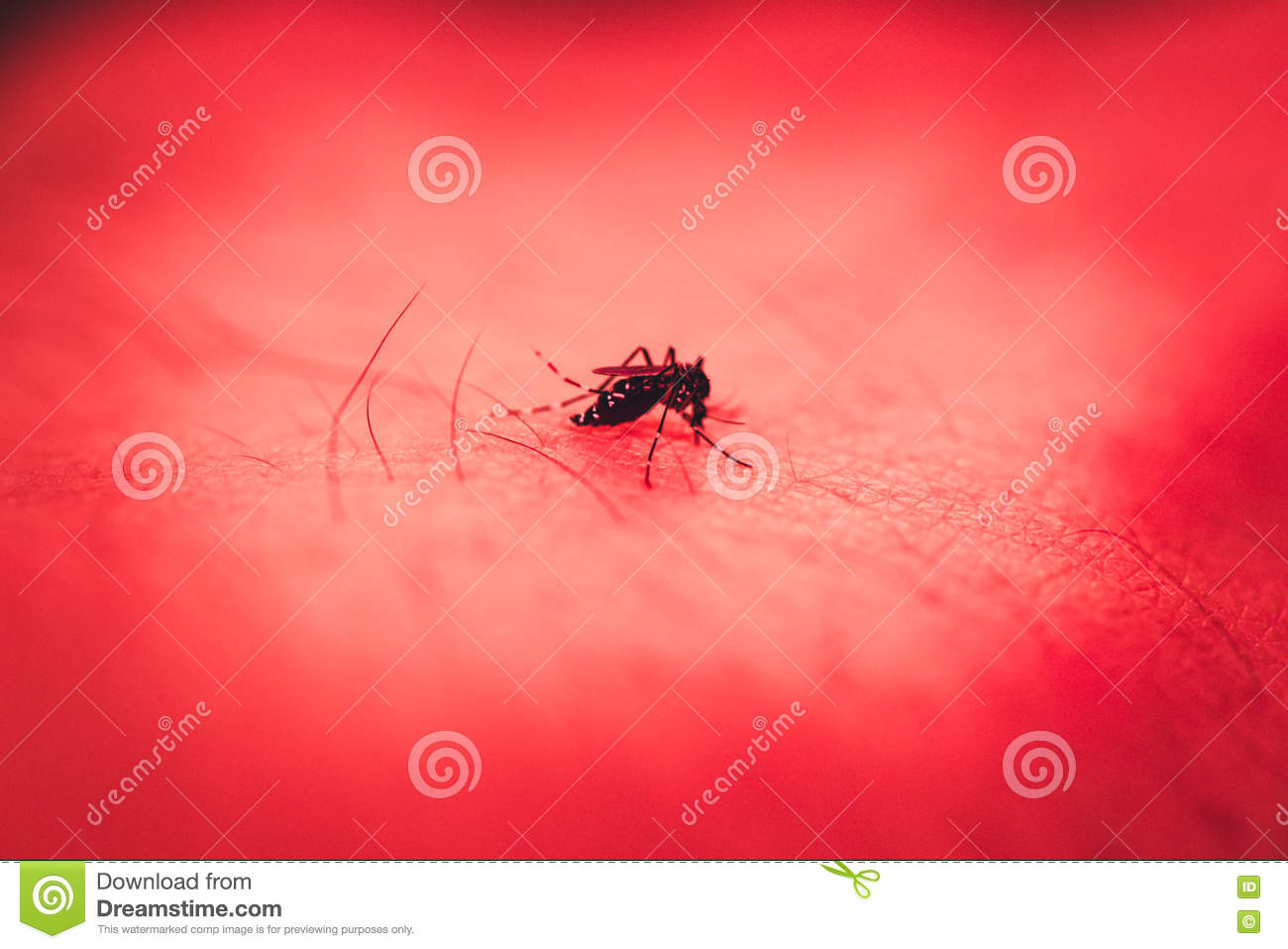 Mosquito Bite At Human Skin With Red Color Tone  Stock Image - Image