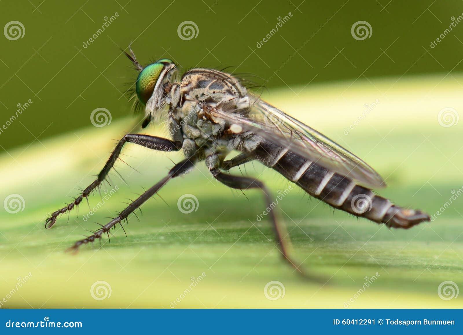 Mosquito en la hoja verde