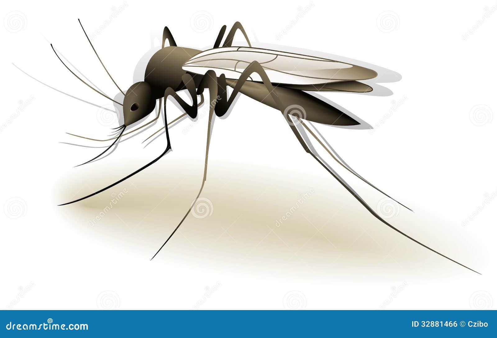 Mosquito stock vector illustration of anopheles sucking 32881466 toneelgroepblik Choice Image