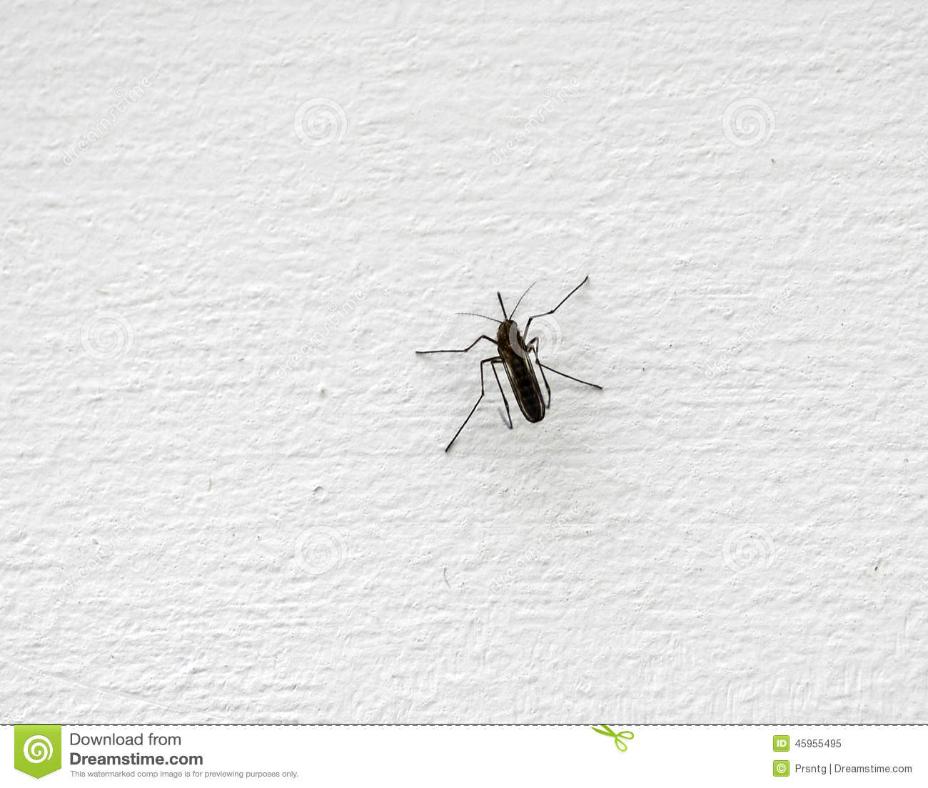 Mosquito on a wall