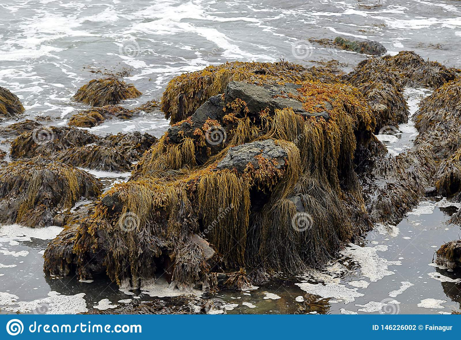 Moss, algae and seaweed on a large rock in the shallow waters