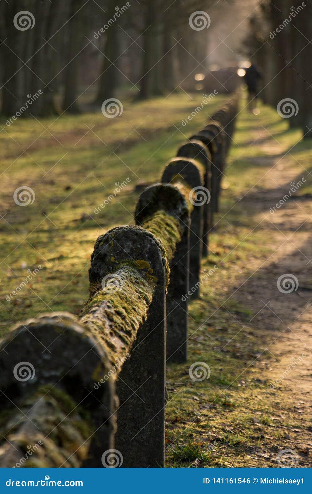 Moss coverd fence Nature Park Green Closs-Up